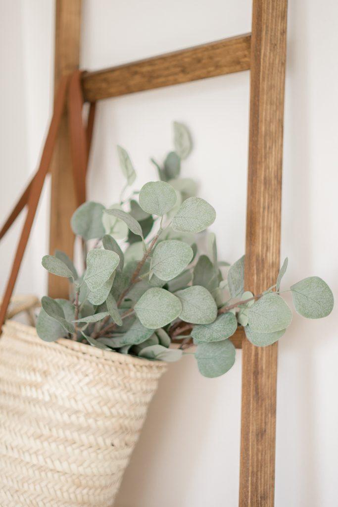 5 raisons pourquoi vous devez avoir des plantes dans votre vie.