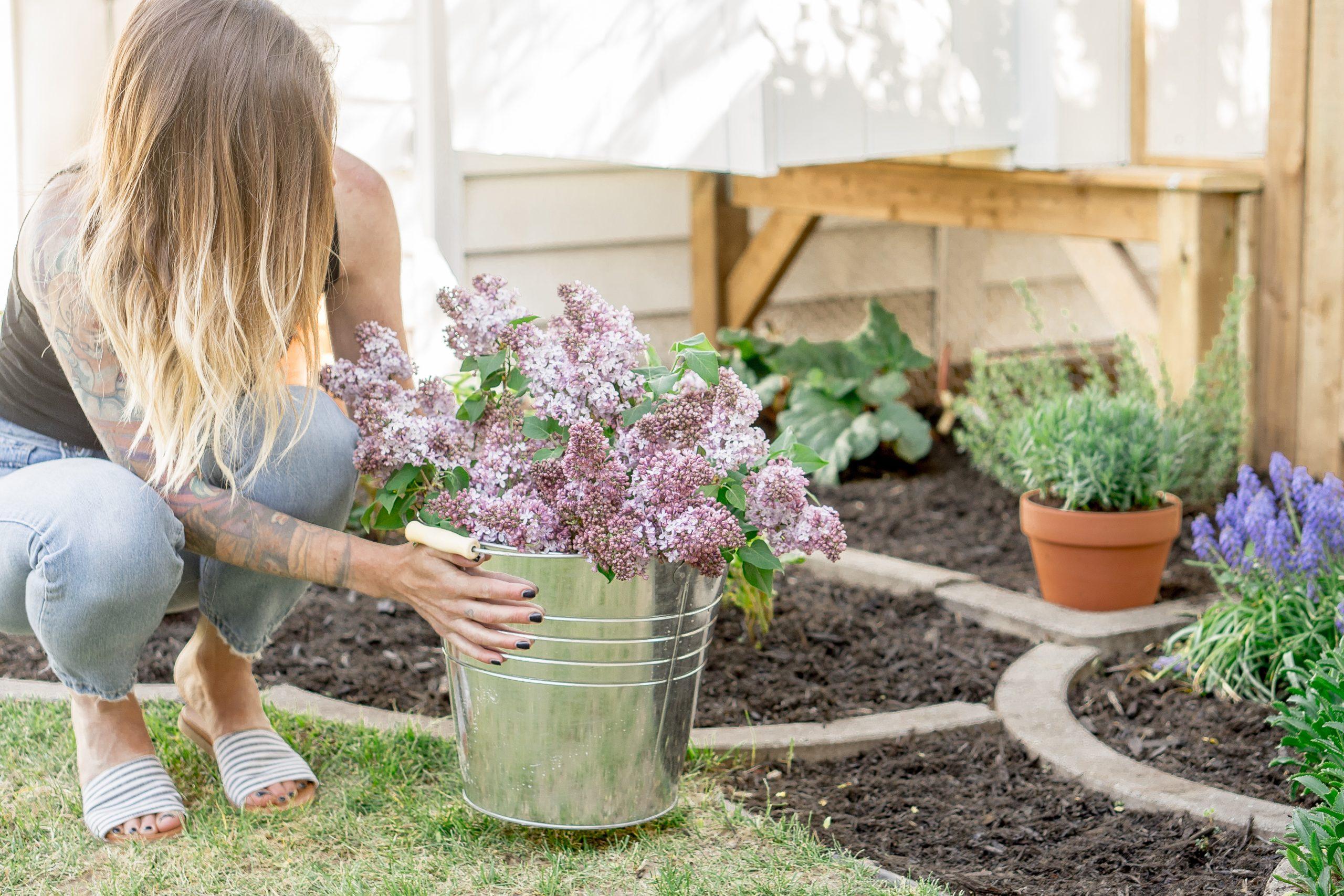 Comment faire durer tes lilas en vase.